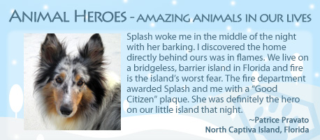 splash-amazing-animal-hero