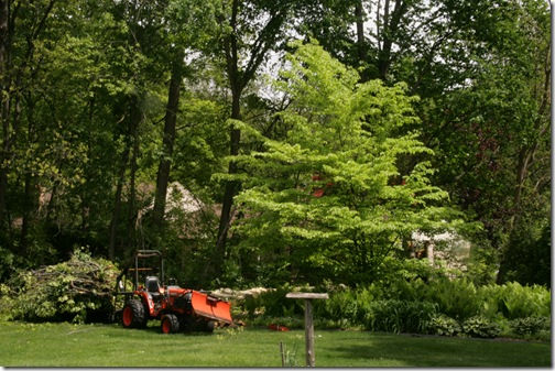 5-9-10 beech tree cleanup, mother's day 002