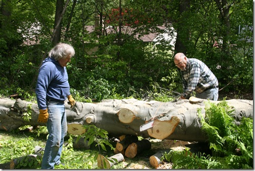 5-9-10 beech tree cleanup, mother's day 015